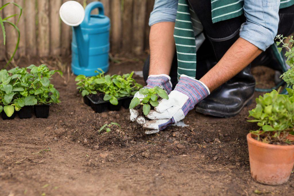 image-planter-potage-jardin-maison